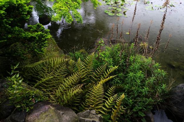 Uma visão do jardim verde de tennoji keitakuen