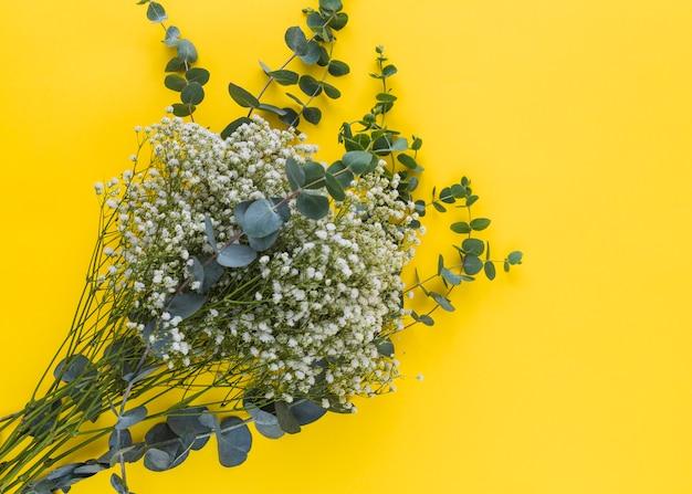 Uma visão elevada de flores de respiração do bebê com folhas verdes sobre fundo amarelo