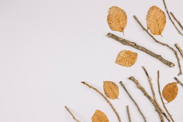 Uma visão elevada de folhas secas e galhos isolados no fundo branco, com espaço de cópia para o texto