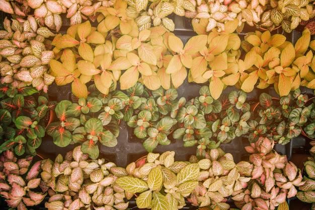 Uma visão elevada de pequenas plantas com folhas coloridas