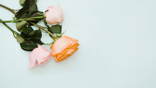 Uma visão elevada de três rosas em fundo azul