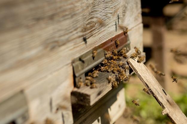 Uma visão em close das abelhas que trabalham trazendo pólen de flores para a colméia em suas patas. o mel é um produto da apicultura. o mel de abelha é coletado em belos favos de mel amarelos.