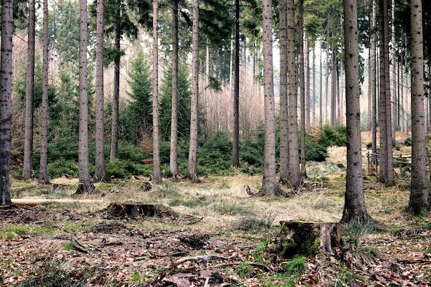 Uma visão linda e detalhada das profundezas da floresta