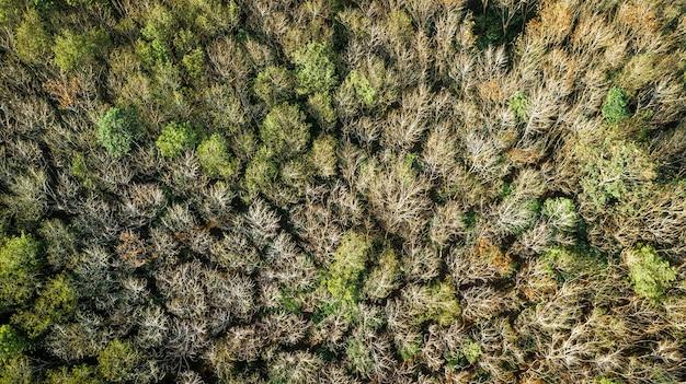Uma vista aérea da floresta.