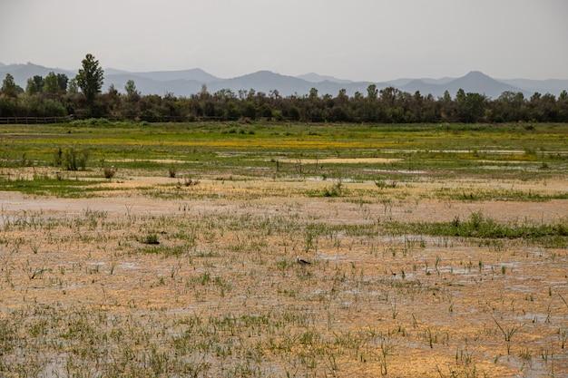 Uma vista com uma perna-de-pau-asa-preta em delta del llobregat, el prat, espanha