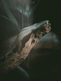 Uma vista fantástica sobre um constritor perigoso