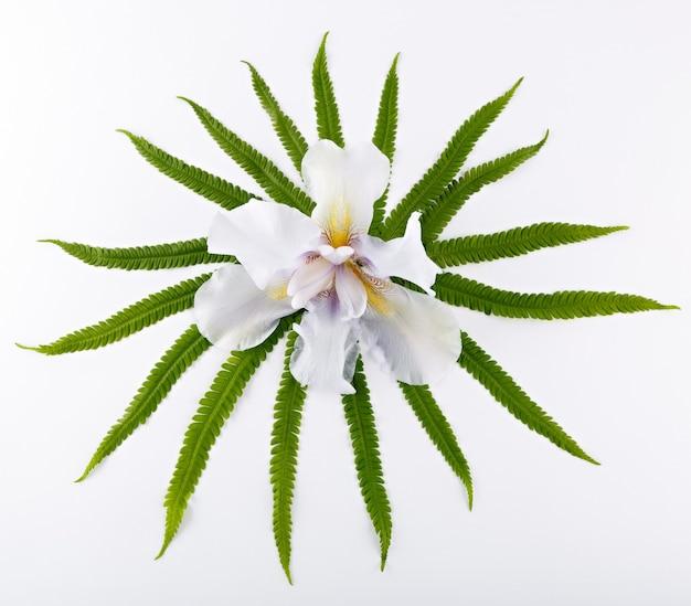Uma vista superior de uma composição com as folhas de uma samambaia e uma flor de íris desabrochando em uma superfície branca