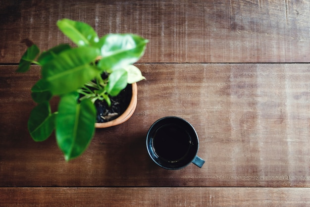 Uma xícara de chá e uma planta em uma mesa
