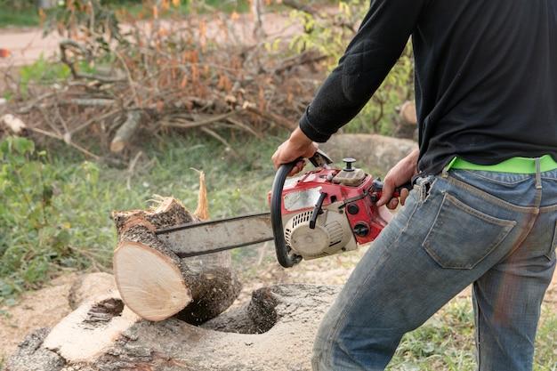 Umberjack com o trabalhador da serra de cadeia que corta o tronco de árvore do tamarindo. motosserra cortando o galho