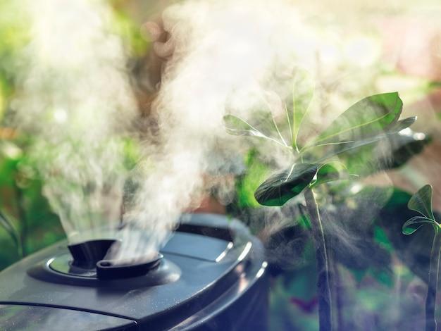 Umidificação para cultivo de flores. o vapor do umidificador de ar na sala.