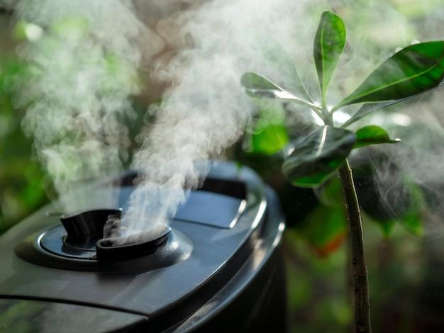 Umidificador para flores. umidificador de ar na janela de casa, direção do vapor de água para uma planta de casa.