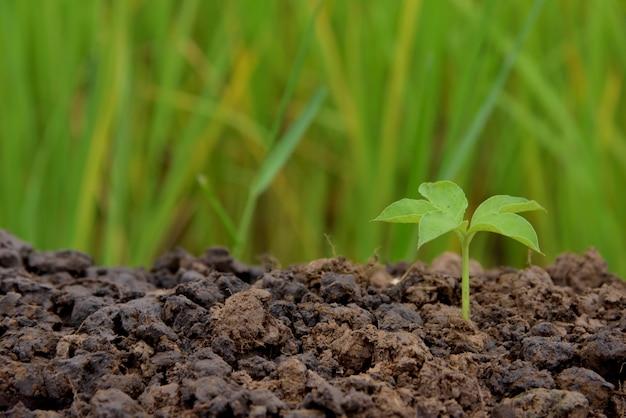 Única árvore nova que cresce na natureza do solo no fundo verde e amarelo da natureza, pôr sobre o