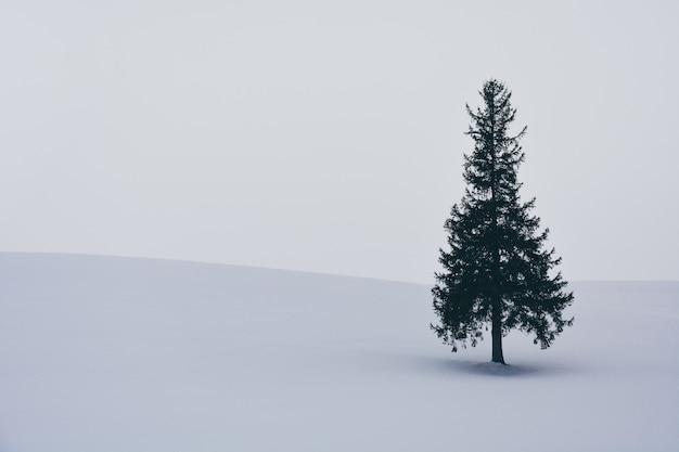 Única árvore spruce na colina coberta de neve durante a queda de neve no dia de inverno