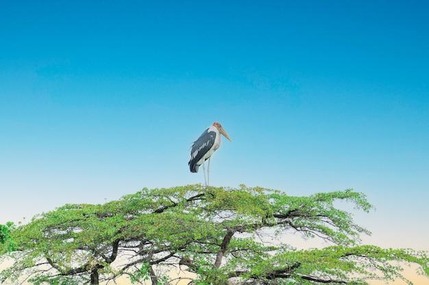 Única cegonha tropical da áfrica do sul marabou grande também o pássaro ajudante sentado no topo da árvore