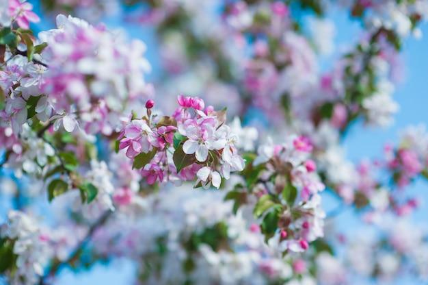 Única flor branca sobre fundo verde. flor branca na natureza