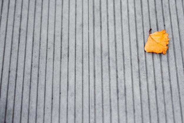Única folha amarela no chão de cimento.