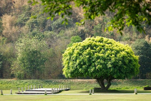 Única grande árvore verde destacada na ponte e na montanha. conceito de diferenciar-se dos outros e esperança de paz calma