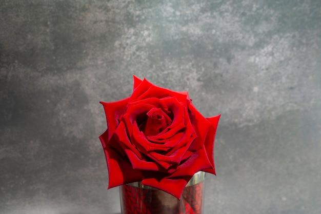 Única grande e linda rosa vermelha com gotas de chuva em um fundo cinza