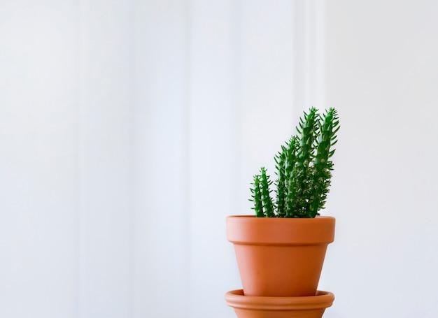 Único cacto em pote marrom com fundo branco em branco, planta interna