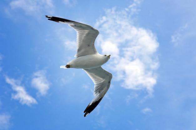 Único voo da gaivota de mar no céu azul e nas nuvens brancas.