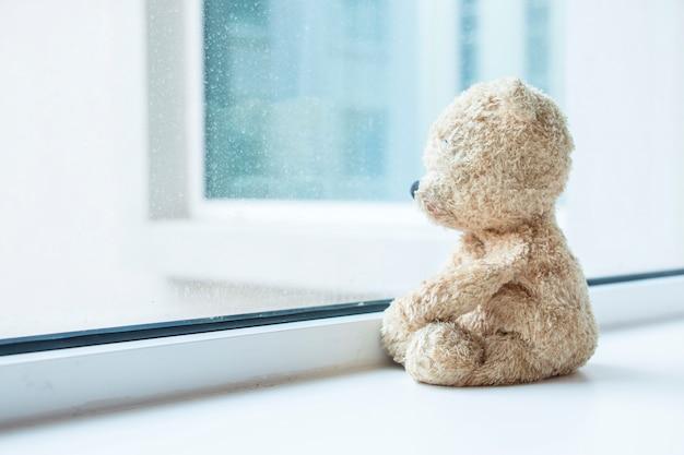 Urso está olhando pela janela