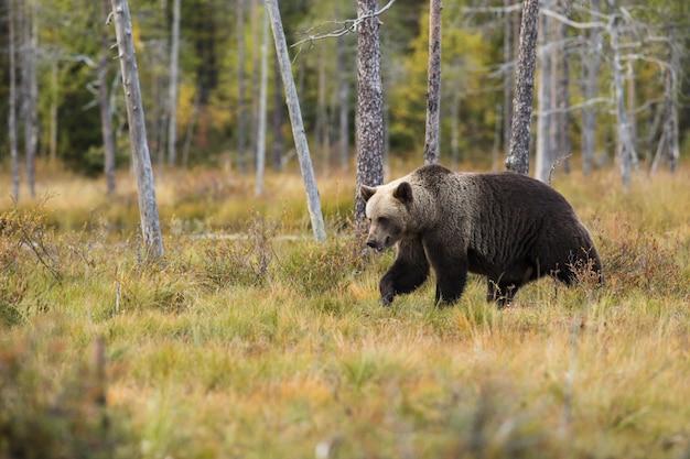 Urso mamífero vida selvagem e animal
