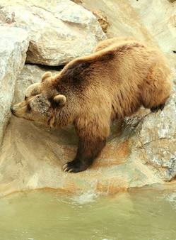 Urso no zoológico