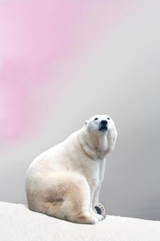 Urso polar majestoso sentado na neve fria descansando