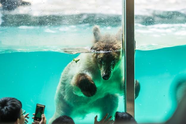 Urso submerso em água