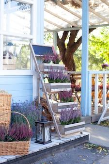 Urze violeta de florescência calluna vulgar no potenciômetro no verande. floricultura. decoração jardim primavera. plantas decorativas de jardim na mesa. cultivo de vasos de plantas. decoração do quintal da casa de campo.