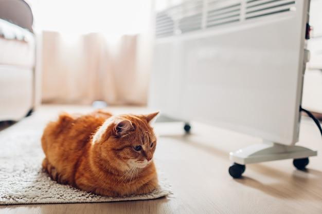Usando aquecedor em casa. estação de aquecimento. aquecimento do gato deitado por dispositivo