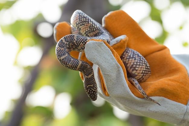 Use a mão segurando uma cobra usando luvas.