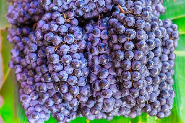 Uva de vinho, frutos silvestres de vinhas lenhosas deciduous do botânico