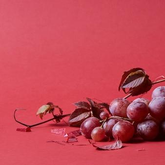 Uva vermelha madura. ramo rosa com folhas isoladas