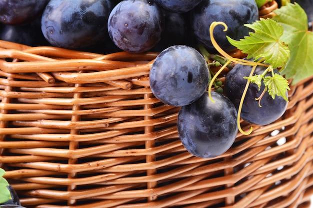 Uvas, a colheita deste ano