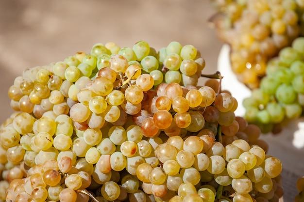 Uvas brancas rkatsiteli em um balde no mercado de rua. fruta.