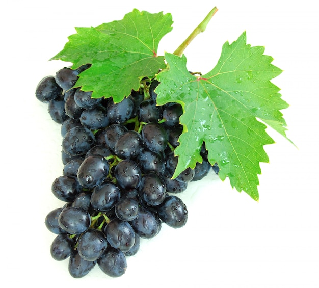 Uvas maduras do outono com gotas da água no fundo branco
