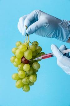 Uvas para alimentos modificados por produtos químicos ogm