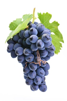 Uvas roxas isoladas em fundo branco