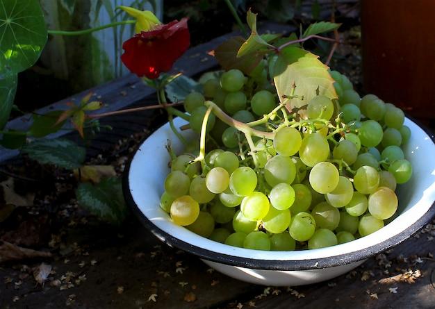 Uvas verdes em um outono de placa
