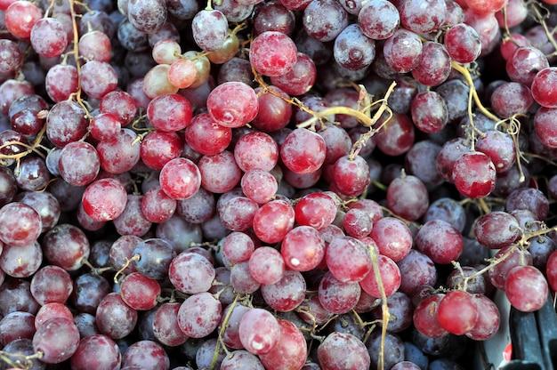 Uvas vermelhas frescas para vinho