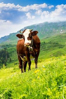Vaca alpina em um campo