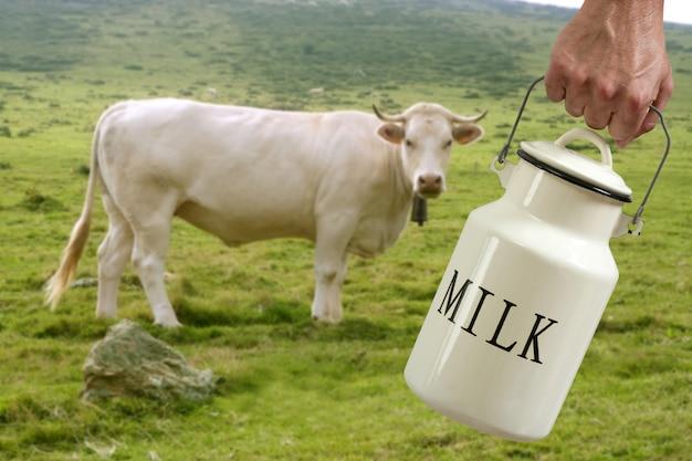 Vaca de leite fazendeiro mão vaca em prado