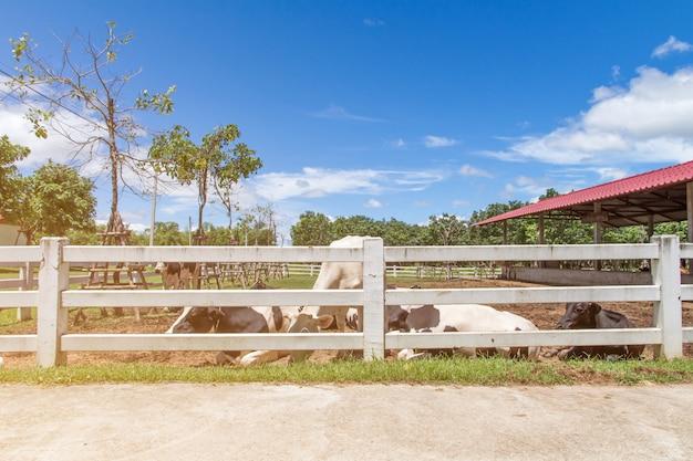 Vaca e bezerro na fazenda no fundo da natureza