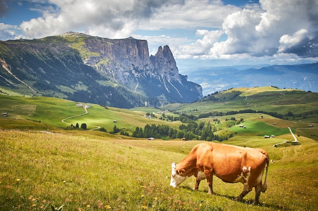 Vaca marrom pastando em um pasto verde cercado por altas montanhas rochosas