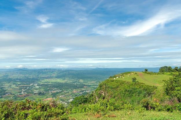 Vacas pastando no ponto mais alto da montanha com um lindo céu e nuvens.