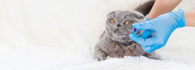Vacinação de gatos. medicina veterinária