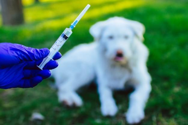 Vacinação sem-teto, animais vadios da raiva e doenças. proteção contra vírus. medicina, animal de estimação, cuidados de saúde de animais. injeção de vacina no cão