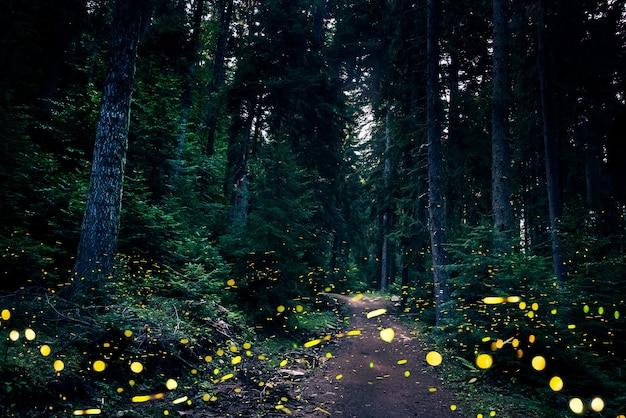 Vaga-lumes voando na floresta ao entardecer.