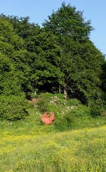 Vagão vermelho para transporte de materiais, estacionado sob uma grande árvore